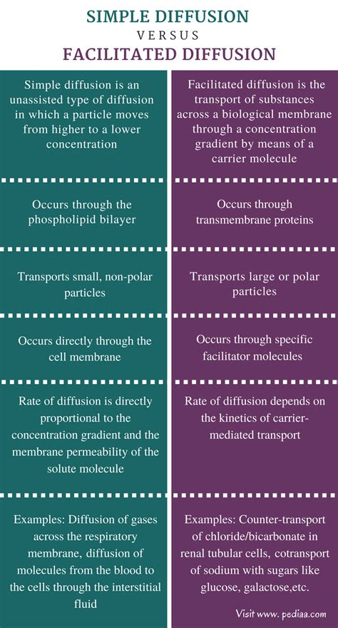 Difference Between Simple Diffusion and Facilitated