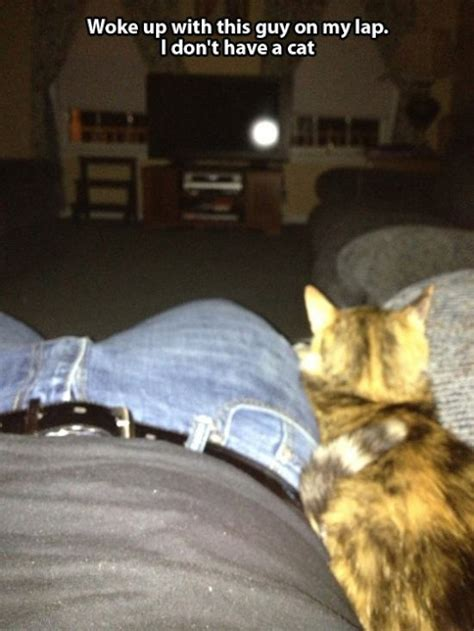 The 'Not My Cat' Epidemic Is Both Cute And Creepy At The